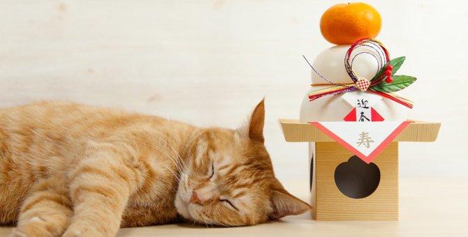 猫が餅食べても大丈夫?与える時の注意