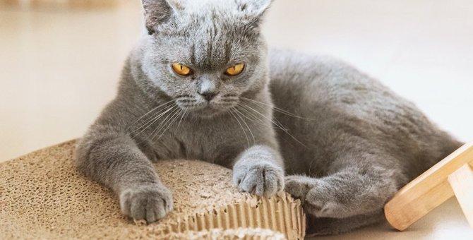 笑い事じゃない!絶対NGな「猫を挑発する」行為5つ