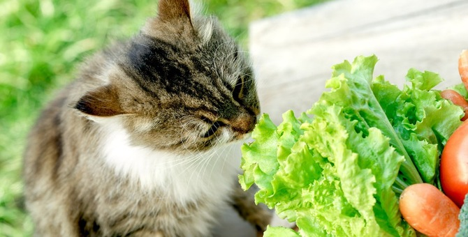 猫にほうれん草は「生」で与えてはダメ!尿路結石に注意