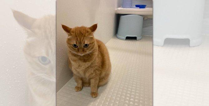 「ここはいったい?」お風呂場に迷い込んだ水嫌いな猫さんの絶望
