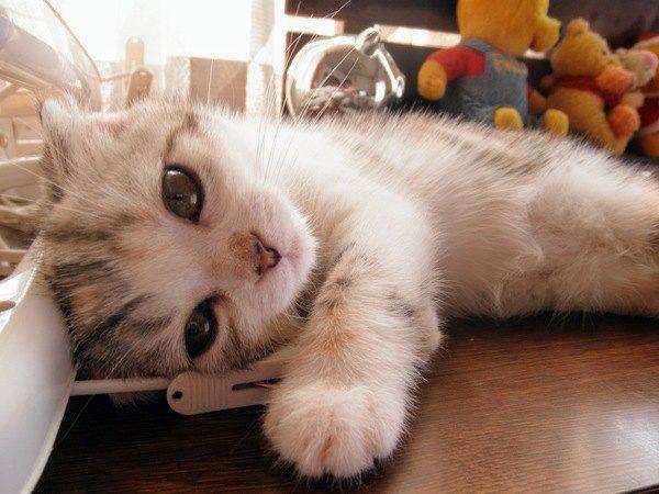 記念日にやろう!猫が絶対喜ぶこと3選