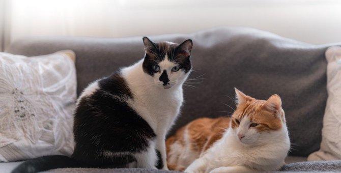 仲が悪い猫同士がとる3つの行動!相性が悪いとこんなトラブルにも…!?