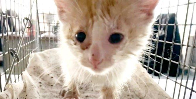 排水溝から子猫の鳴き叫ぶ声…女性の必死の願いで救出成功へ!