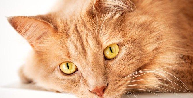 猫の視界から見た世界