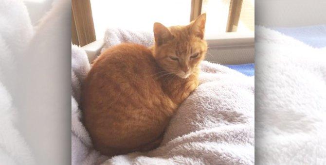 保護センターから来た子猫。たった5日で「ずっと前から居た感」!?