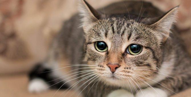 猫が『極度のストレス』をため込んでいる時のサイン4選!どうやって解消させてあげればいいの?
