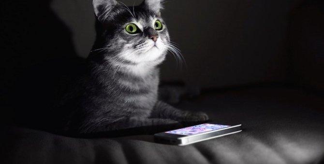 猫は暗闇でも電気をつけなくて大丈夫!