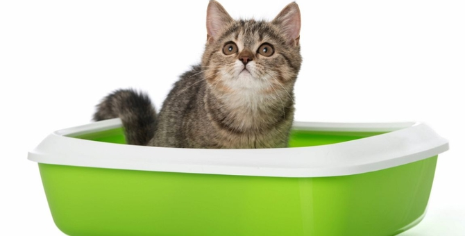子猫用トイレの選び方!種類やしつけ方、猫砂のタイプ