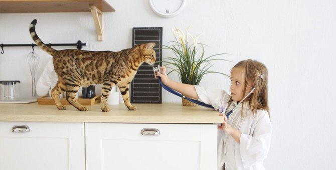 ここを注意してみよう!猫の具合が悪いときの4つのチェック項目