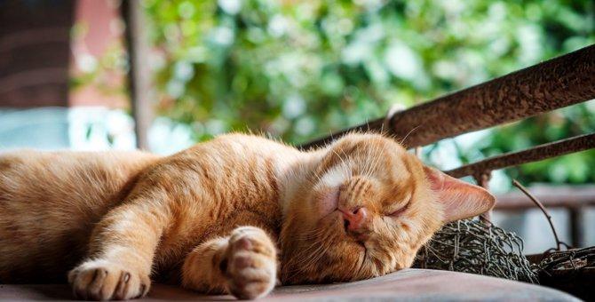 猫が「プルルル」と鳴くときの心理5つ
