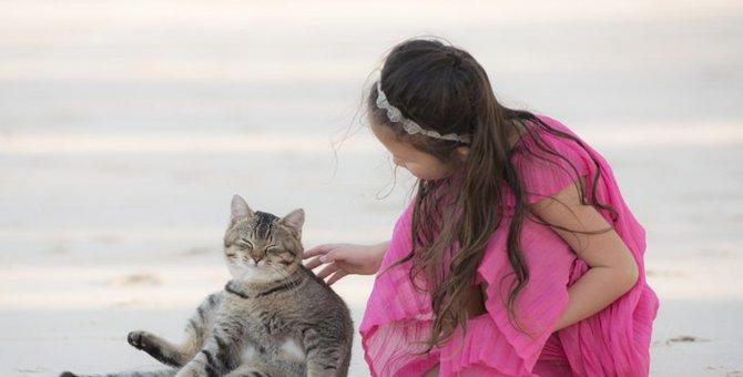 猫が「んー」と鳴く理由と気持ち