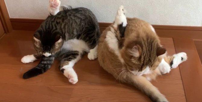 仲良し♡同じポーズで毛づくろいする親子猫ちゃんたちが可愛い♡