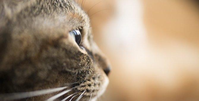 末期の猫のリンパ腫 症状や余命、飼い主として出来ること