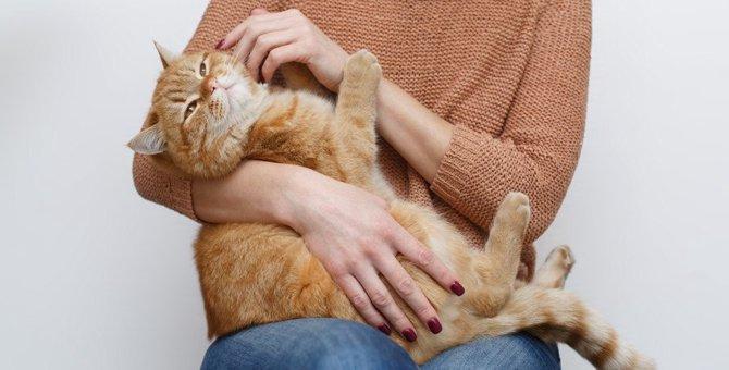 猫の飼い主がしがちな『タブー行為』10選