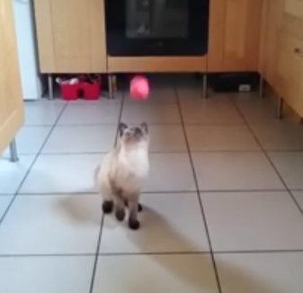 よ〜く見すぎて顔面キャッチしちゃう猫