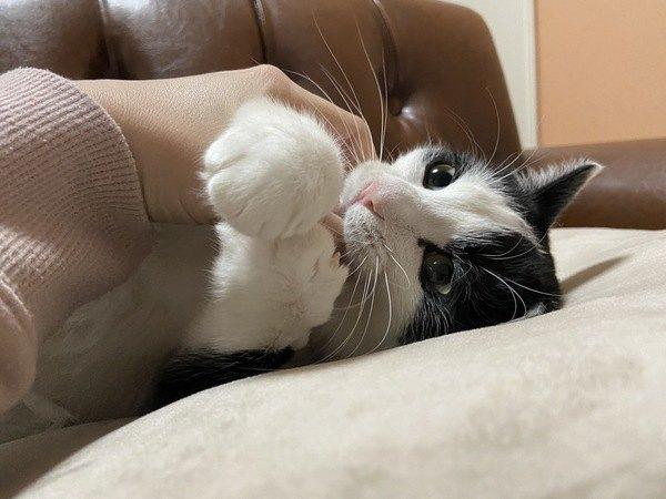 猫についつい『人の子供』のように接してしまう瞬間4つ