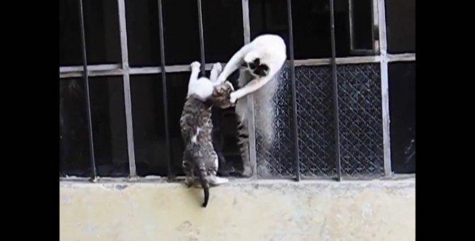 「今助けるニャ!」必死に子猫を助ける母猫!母の愛に感動しちゃいます!