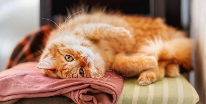 猫が『洗濯物ゴロゴロ』が好きな理由と防止策3つ