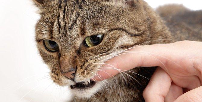 猫がよだれを垂らす原因と注意点