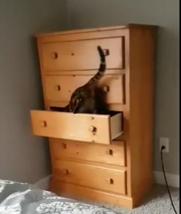忍者!?たんすに隠れきる猫!