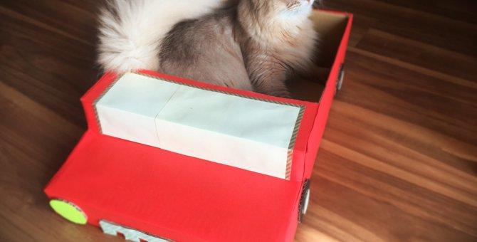 猫のためのDIY♪ひと手間加えて『オープンカー風ダンボールハウス』を作ってみた♪