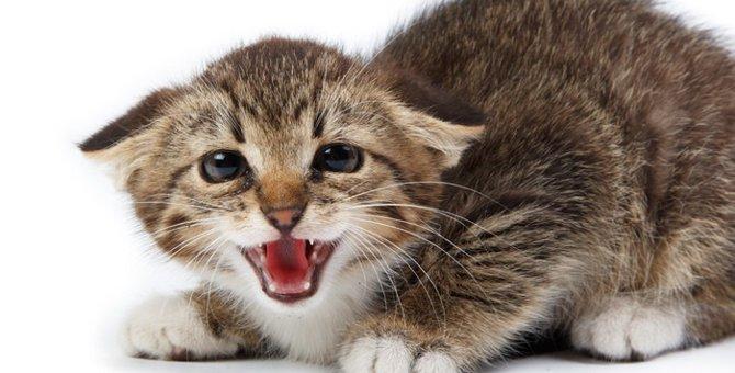 猫が警戒している時の6つの仕草