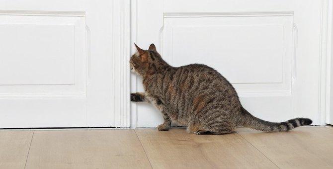 猫を閉じ込めがち…!ハイリスクな場所5つ