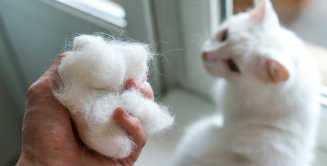猫が『毛球症』になる3つの原因とは?その症状と対処法を解説!