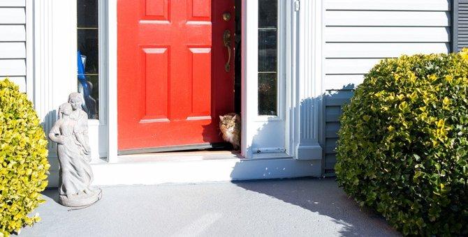 イライラ…猫が嫉妬しているときの仕草や行動8つ