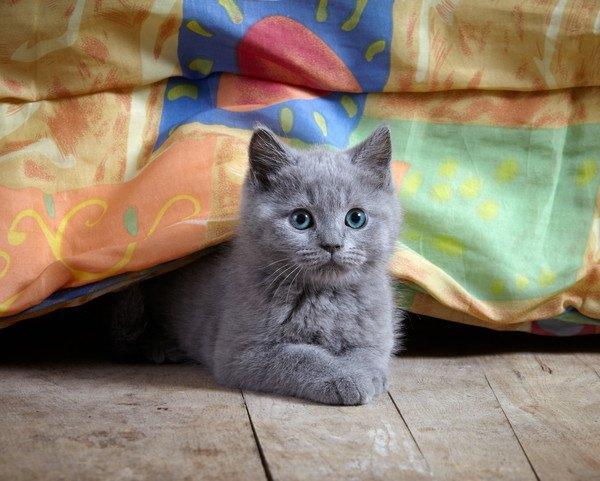 猫がお気に入りの物を隠しがちな6つの場所
