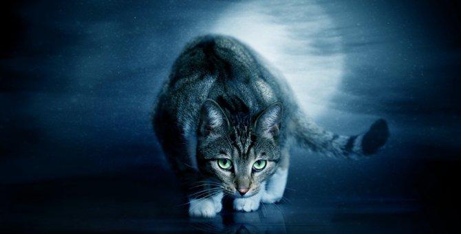 猫が幽霊を見る行動の理由とは