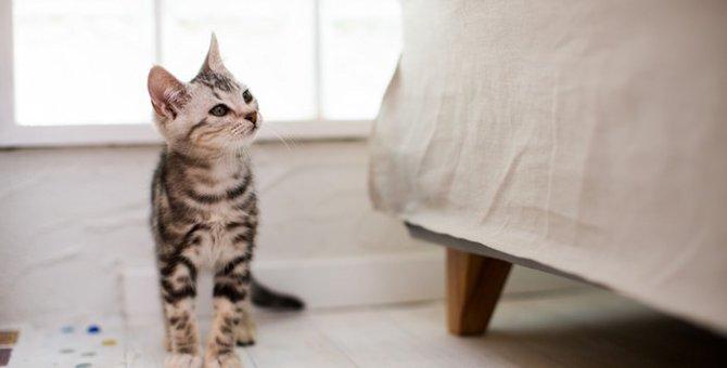 子猫がご飯を食べない理由や対処法