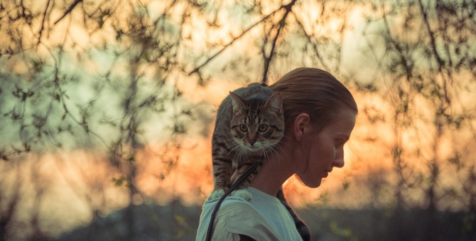 肩乗り猫になる理由と乗ってもらう方法、注意点まで
