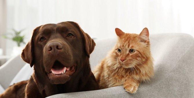 猫と犬を一緒に飼う時に必ず知っておかなければならないポイント5選