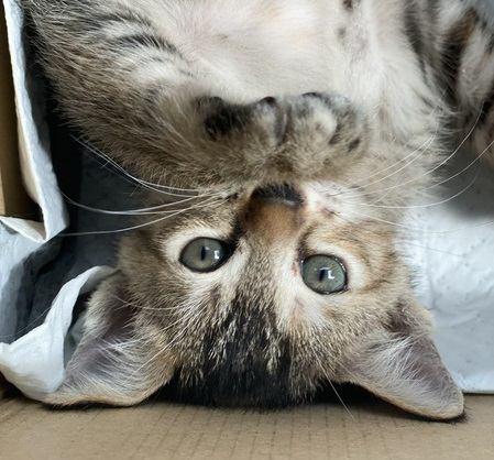 猫が『寝転がる』時の心理5選!急にゴロゴロするのには意味がある?