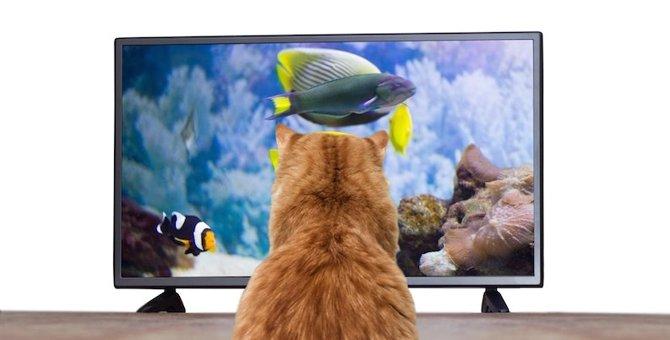 猫もテレビが大好き!夢中になる映像の特徴6つ