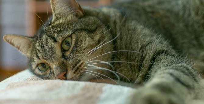 猫を呼んでも反応しない時に考えられる3つの要因