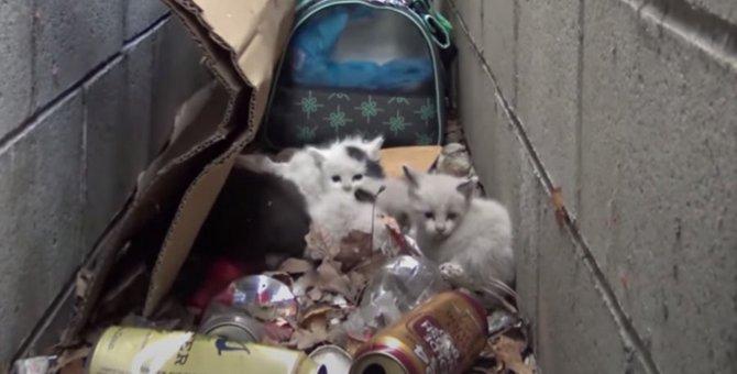 塀のすき間に放置された5匹の子猫を救助…母猫が受けた『TNR』とは?