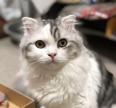 猫は自分の名前を理解してる?