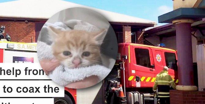 水圧で救え!排水管から出られなくなった子猫のレスキューに消防車出動