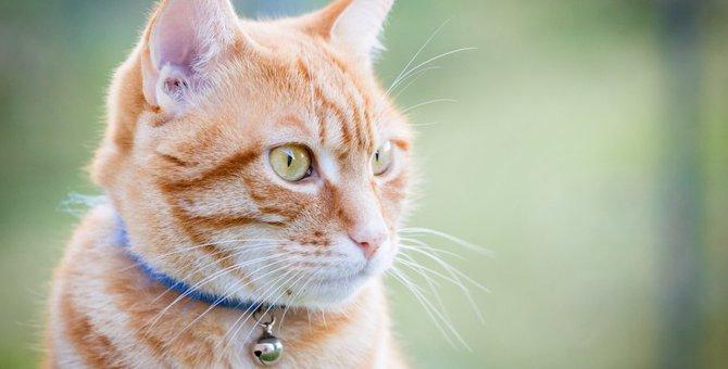 猫は首輪の鈴にストレスを感じる?
