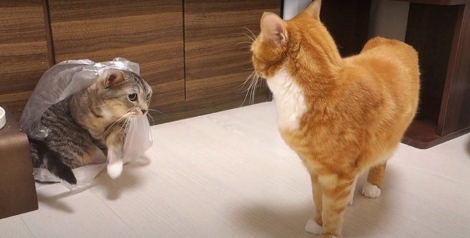 一目散にぴゅーん!猫ちゃんの喧嘩回避術
