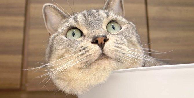 猫ちゃんのほっぺから溢れるはみ肉