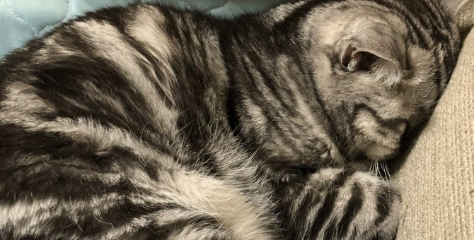 猫の『眠りの深さ』を見分ける方法4つ!注意すべき状況とは?