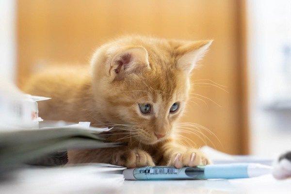 猫が机の上からワザと物を落とす心理3つ