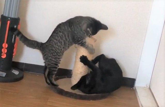 気まず〜い!仲良し姉妹猫でも見間違える時もある