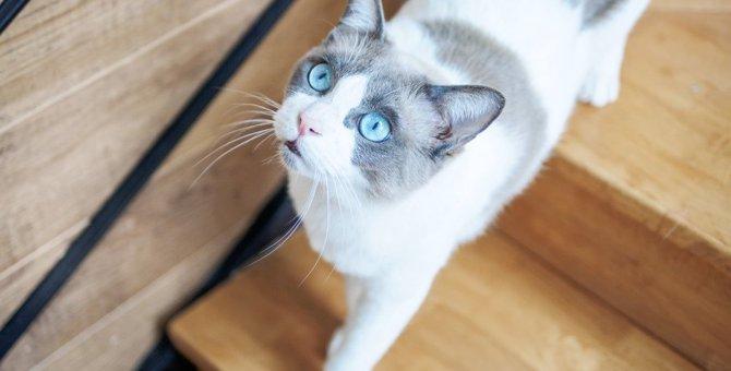 猫が部屋をウロウロする時は『病気』が隠されていることも?