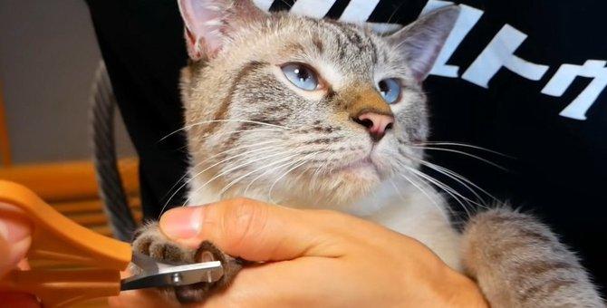 爪切りタイムに猫ちゃんは…?