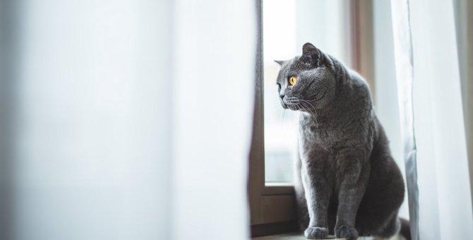 知らないと危険!猫の命を奪う『感染症』4つと予防策