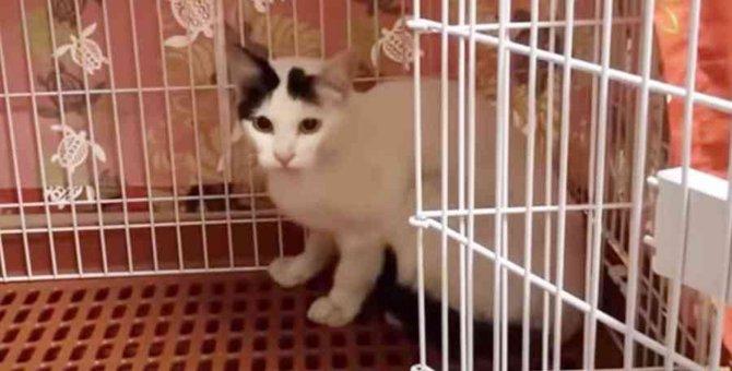 引っ越しで置き去りにされた猫…住民の善意で新たな人生へ No.2